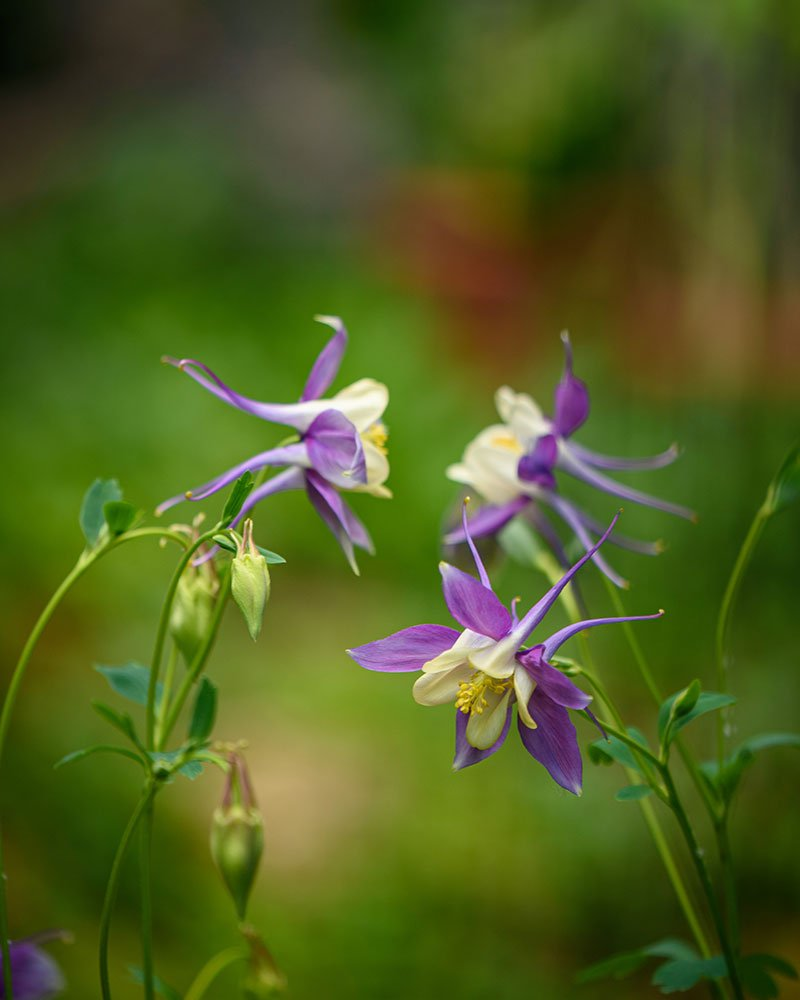 Flowers stock photography gallery by Siobhan Hegarty